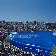 Shamu jumping outside of the water.<br /> Seaworld San Diego.<br /> California USA.