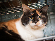 Rosa is a spayed female of undetermined age.  She was found as a stray on July, 31st.
