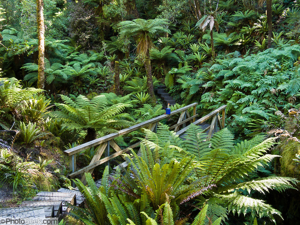 A wooden bridge crosses a stream on Tuatapere Hump Ridge Track, in Fiordland National Park, South Island, New Zealand. In 1990, UNESCO honored Te Wahipounamu - South West New Zealand as a World Heritage Area.