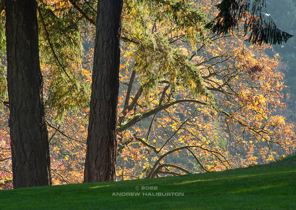 Fall colors, Mount Tabor Park, Portland, Oregon