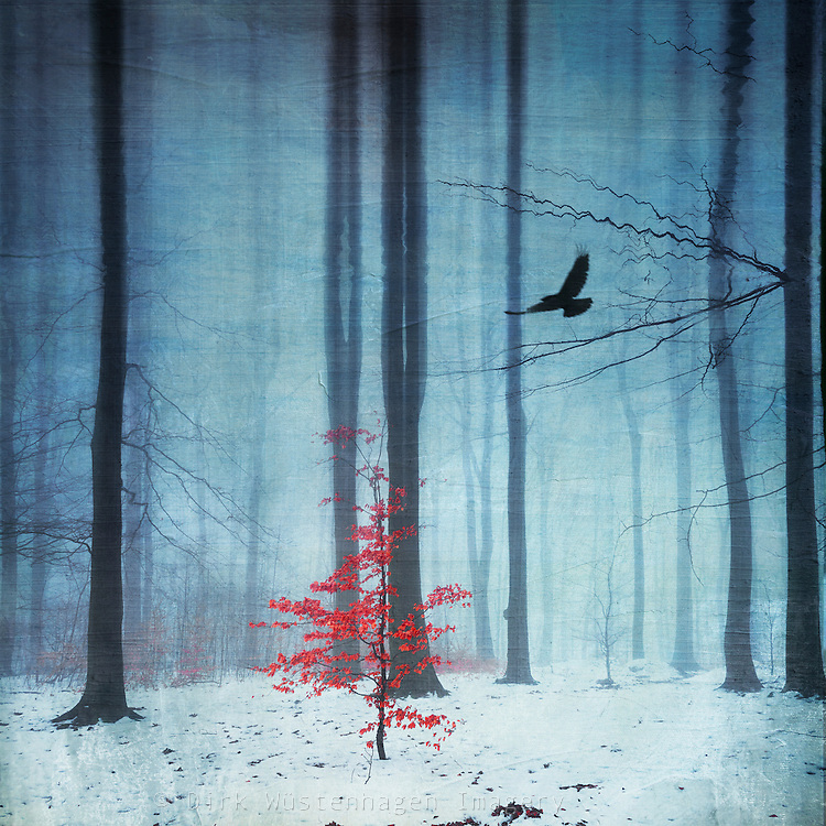 Surreal wintry forest scenery with a small tree with red leaves - manipulated photograph<br />