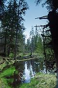 Forest in Glacier Bay National Park, Alaska.