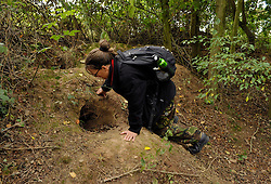 © Licensed to London News Pictures. 08/09/2013.  Gloucestershire, UK.  Campaigner Lynn from Stop the Cull checks near badger setts to see if the cull team have baited them with peanuts to draw the badgers away from the sett entrance so they can be shot. This badger sett looks disused. The Government has licensed a pilot badger cull in parts of Somerset and Gloucestershire as part of efforts to reduce bovine tuberculosis in cows on farms. Campaigners say the cull is inhumane and will not eradicate bovine tuberculosis.  08 September 2013.<br /> Photo credit : Simon Chapman/LNP
