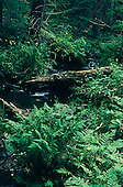 01238_Coronado_Trail_KP_Creek_trail