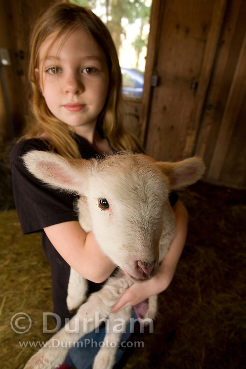 9 year old Shenoa holds a three day old lamb on a Sauvie Island farm, Oregon. Model and property released.