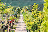 Walkway at plant nursery