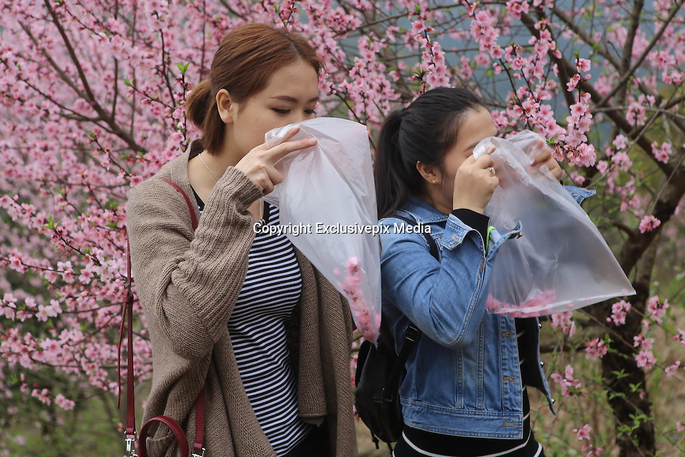 QINGYUAN, CHINA - MARCH 19: (CHINA OUT) <br /> <br /> Visitors collect clean air in north area of Guangdong Province where mountains surround with clean air on March 19, 2016 in Qingyuan, Guangdong Province of China. Urban citizens in north China\'s Guangdong Province get away from smog-stricken cities to mountain-surrounded north areas and local residents think up an idea of selling clean air that a small bag of air sells 10 yuan and a larger one 30 yuan. The activity seems to be an effective way to promote environmental protect both in urban and rural areas, said a visitor. <br /> ©Exclusivepix Media