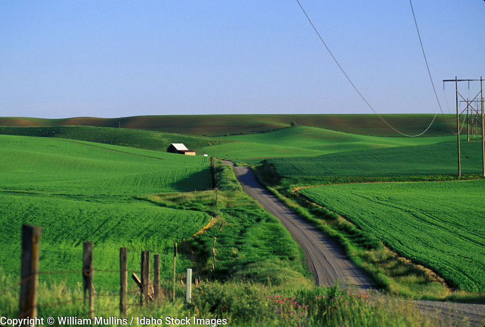 THIS PHOTO IS AVAILABLE FOR WEB DOWNLOAD ONLY. PLEASE CONTACT US FOR A LARGER PHOTO. Palouse green farmland with fence and dirt road near Genesee.  Idaho