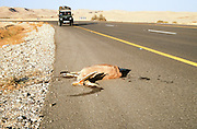 Israel, Roadkill on side of road