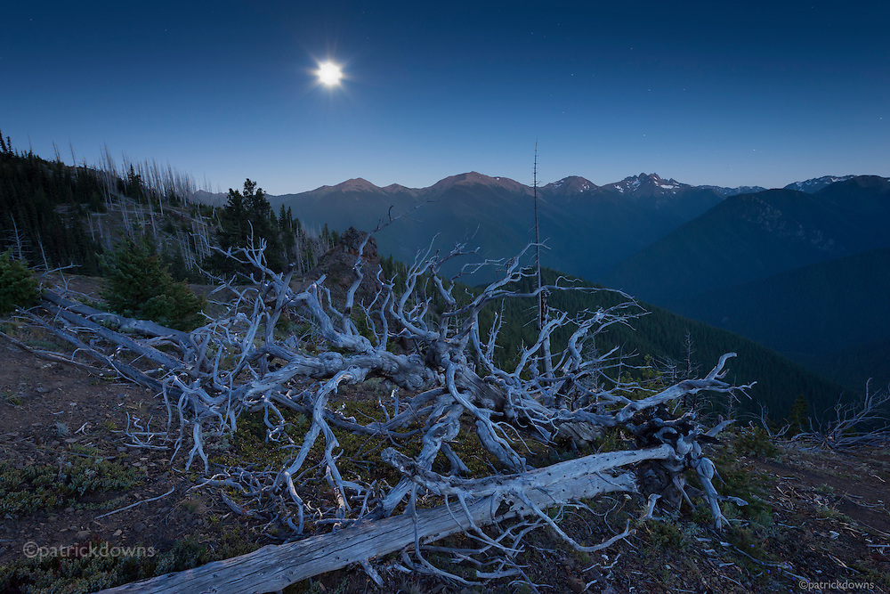 Tree skeleton lit by the full moon, on Blue Mountain in Olympic National Park.