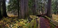 Ross Creek Cedars Montana