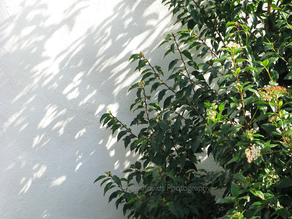 Green Shrub on White Wall