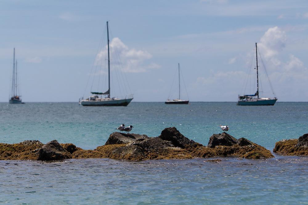 Gros Islet, Saint Lucia. © Allen McEachern.