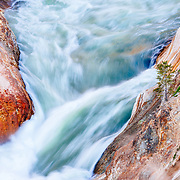 An abstract view of the Yellowstone river hints at the scale of rapids utilizing full-grown trees at water's edge.