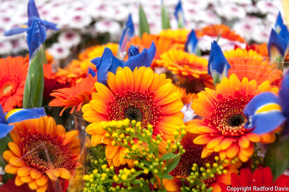 Flowers at the Albert Cuyp Market, Amsterdam, The Netherlands.