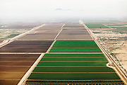 Smog from downtown Phoenix hugs irrigated fields 30 miles south of the city. Smog's negative effect on plant growth has been a major cause of crop losses around the world.