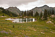 a pond along the Naches Peak Loop Trail south of Chinook Pass with a meadow of lupine in the William O Douglas Wilderness Wenatchee National Forest, Washington state, USA