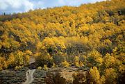A fall bike ride among the aspen on monitor pass, ca