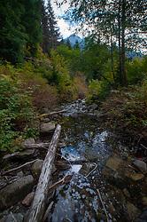 Big Creek Below Lipsy Lake, Taylor River Road, Mt. Baker Snoqualmie National Forest, Washington, US