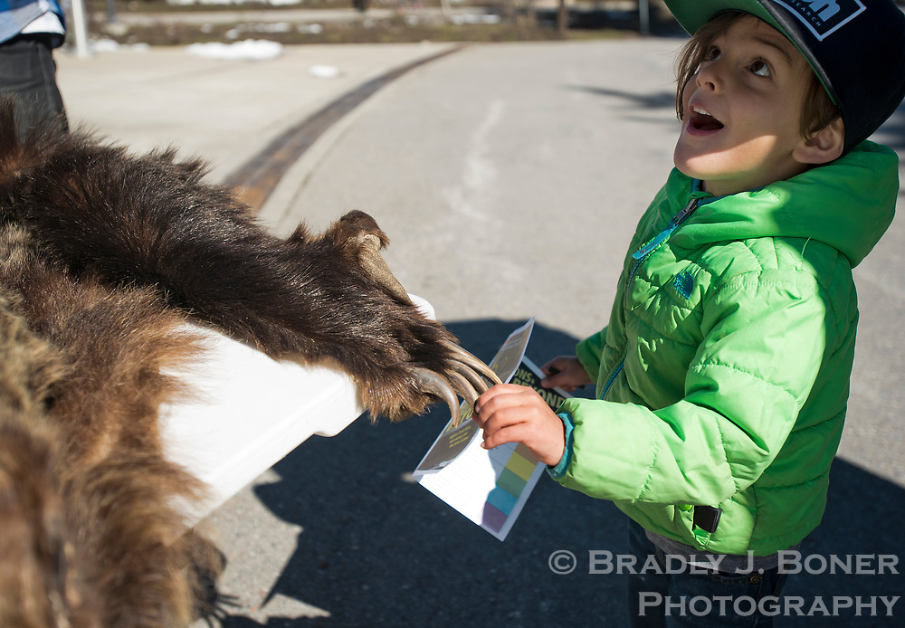 Rawlin Kearns, 4, of Jackson, reacts to the size of claws on a grizzly bear pelt Saturday during Junior Ranger Day at the Craig Thomas Discovery and Visitor Center in Grand Teton National Park. The display gave kids an up-close opportunity to touch and feel a bear's fur without the risks involved in petting a live grizzly.