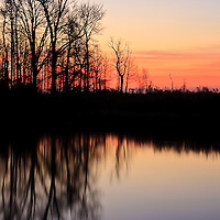 Trees silhouetted against the early morning twilight and reflected in a brackish pond, Bombay Hook National Wildlife Refuge, Smyrna, Delaware.
