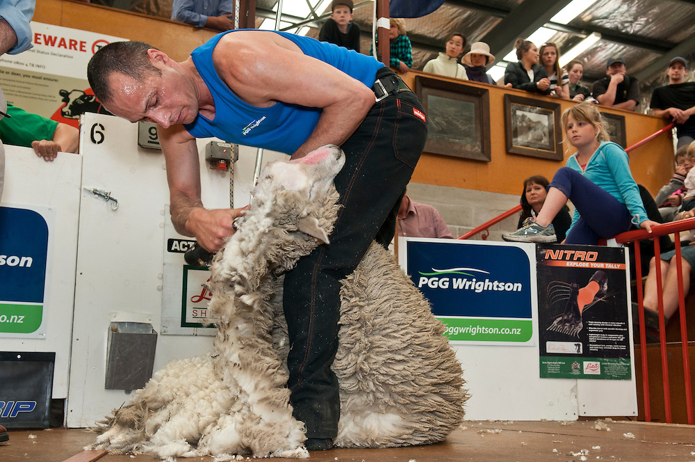 Johnny Kirkpatrick of Napier competes in the NZ Corriedale Open Machines shearing final at the Canterbury A&P Show, Christchurch, New Zealand, Friday, 15 November, 2013.  Credit: SNPA /  David Alexander.