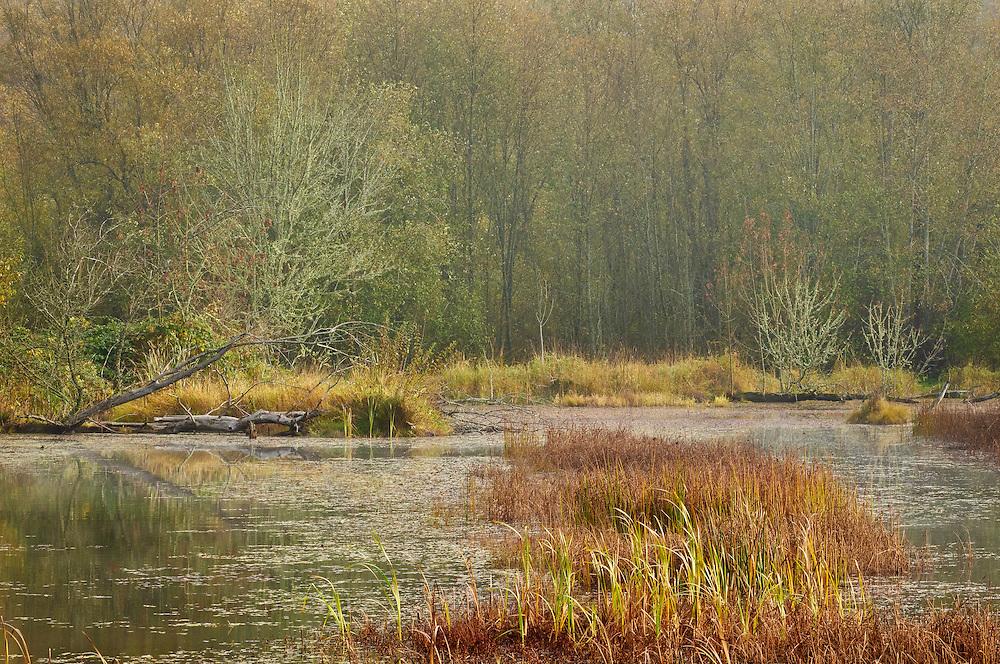 Wetland pond at Nisqually National Wildlife Refuge, Washington.