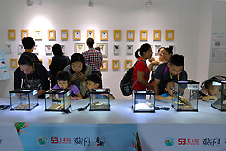 October 9, 2018 - Guangzhou, Guangzhou, China - Guangzhou,CHINA-The first insect art exhibition is held in Guangzhou, south China's Guangdong Province, October 8th, 2018. (Credit Image: © SIPA Asia via ZUMA Wire)