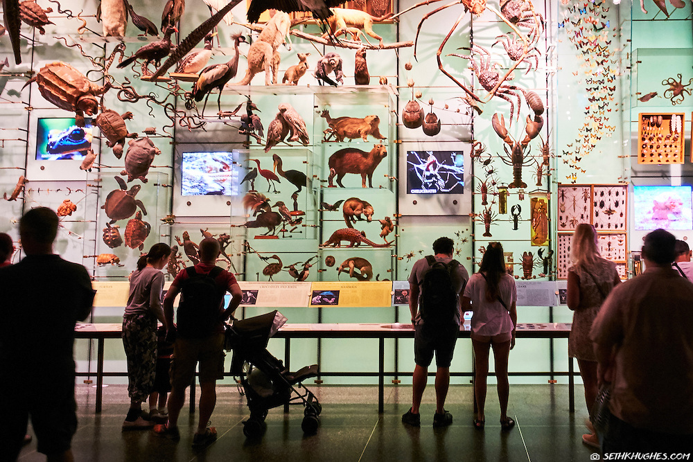 The American Museum of Natural History in New York City, NY.