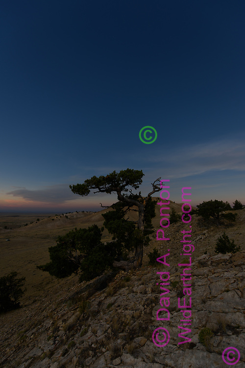 Rocky ridge and bristlecone pine tree during solar eclipse, 6 seconds before totality. WY, © 2017 David A. Ponton