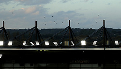 Birds fly over the stands at Pride Park