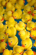 Rubber duckies in a carnival game.