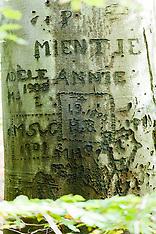 2009-2013 Arborglyphs, Beschreven bomen.