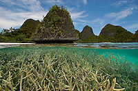 Split level/over-under view of karst islands and staghorn corals in the Wayag Group, Raja Ampat Islands, Indonesia.
