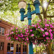 Flowers in Downtown Bellingham, WA
