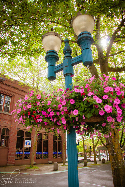 Flowers in Downtown Bellingham, WA