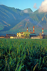 Sugar Field and Refinery Agriculture