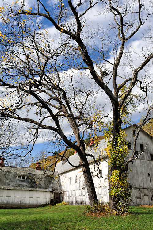 On this Delaware Water Gap farm closed up and unused for years, a white barn and large black walnut tree sit waiting for revival on a sunny fall day.