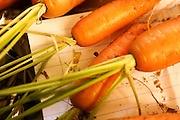 Home grown carrots from a small Organic vegetable patch