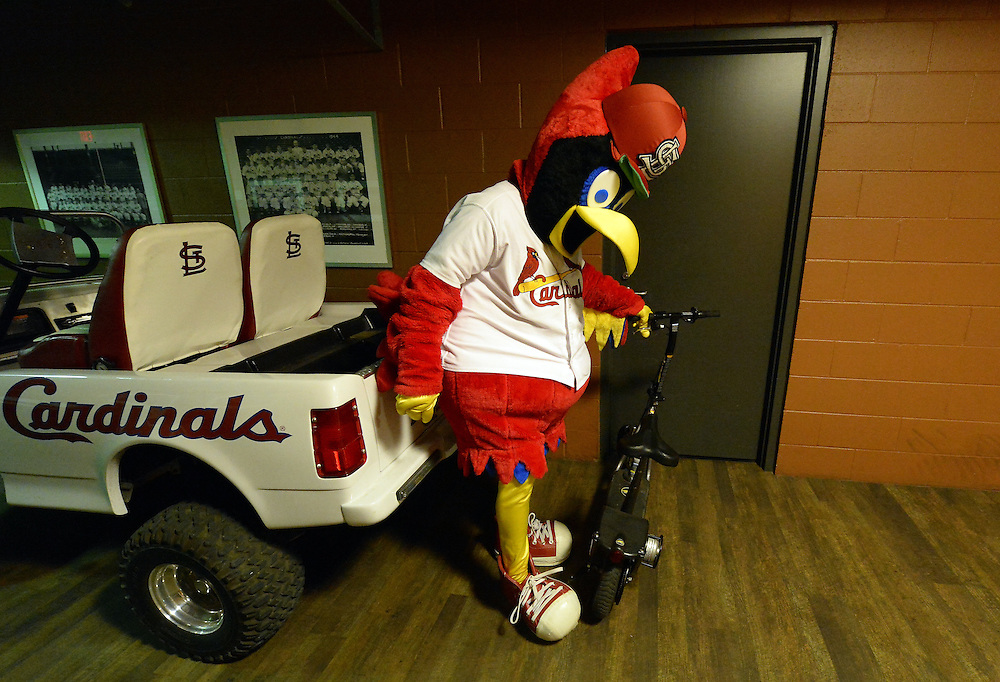 ST. LOUIS, MO - OCTOBER 6:  St. Louis Cardinals mascot Fredbird rides a motor scooter inside the stadium during GAME 3 of the NLDS against the Los Angeles Dodgers at Busch Stadium on Monday, October 6, 2014 in St. Louis, Missouri. (Photo by Ron Vesely/MLB Photos via Getty Images)
