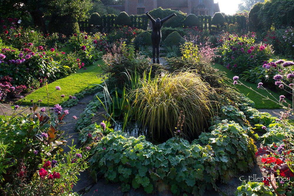Ornamental grasses in a pond surrounded by borders of dahlias in the sunken garden at Chenies Manor House, Chenies, Rickmansworth, Buckinghamshire, UK