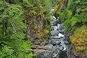 Englishman River Falls <br /> Englishman River Falls Provincial Park<br /> British Columbia<br /> Canada