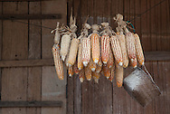 Sweet Corn on a rope, Luang Namtha.