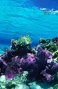 Coral reef<br />