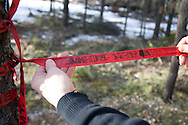 Photo Randy Vanderveen.south of Grande Prairie.Mike Dutove shows the marking on a survey ribbon. The three ribbons on this tree indicate the centre of a plot. The numbers on the ribbon indicate the year of the survey, quarter, plot number of infected trees and number of standing peel. Surveyors are expected to have a 97 per cent accuracy rate when marking plots or the company will be charged dockage.