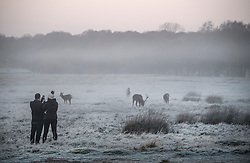 © Licensed to London News Pictures. 19/01/2020. London, UK. Members of the public watch deer grazing in a frost covered landscape at sunrise in Richmond Park in west London on a bright and freezing Winter morning. Photo credit: Ben Cawthra/LNP