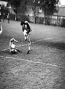 Division 1A Playoff At Iveagh Grounds..St James Gate vs Park Villa..1986..28.05.1986..05.28.1986..28th May 1986..Photograph of Parkvilla goalkeeper,Ian Baily,collecting the ball despite the attentions of St James's Gate striker,Oran Maher in the division 1A playoff.