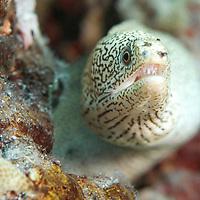 Sealife - Caribbeans
