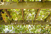 Grape vines growing in the garden at Will Gissane's Herefordshire home<br /> CREDIT: Vanessa Berberian for The Wall Street Journal<br /> HOBBY-Gissane/UK