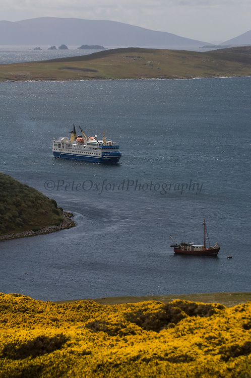 The Ocean Nova Cruise Ship anchored in West Point Harbour.<br /> West Point Island. Off of West Falkland. FALKLAND ISLANDS.<br /> An island owned by Roddy and Lily Napier who have lived there for most of their lives. It is a small sheep farm with about 1,000 sheep and some cattle but now they survive mainly on tourism with several cruise ships visiting during the summer. The island is renowed for its huge Black-browed Albatross Rockhopper Penguin colonies.